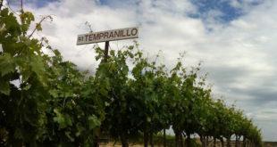 Original_1993_Tempranillo_plantings_at_Red_Willow